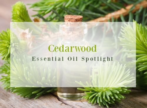 Cedarwood-Essential-Oil-Spotlight-500x366.jpg
