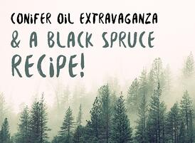 Conifer-Oil-Extravaganza-and-A-Black-Spruce-Recipe-900x900-V1.jpg