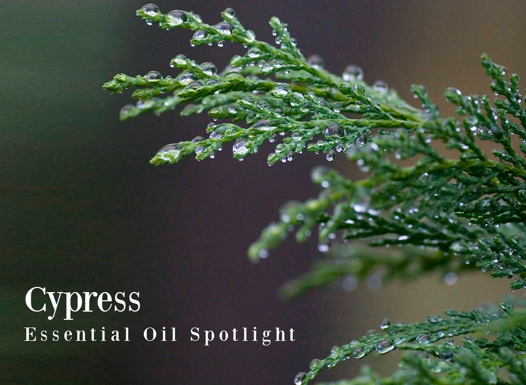 Cypress Essential Oil Uses