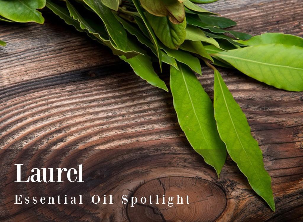 Laurel Essential Oil Spotlight