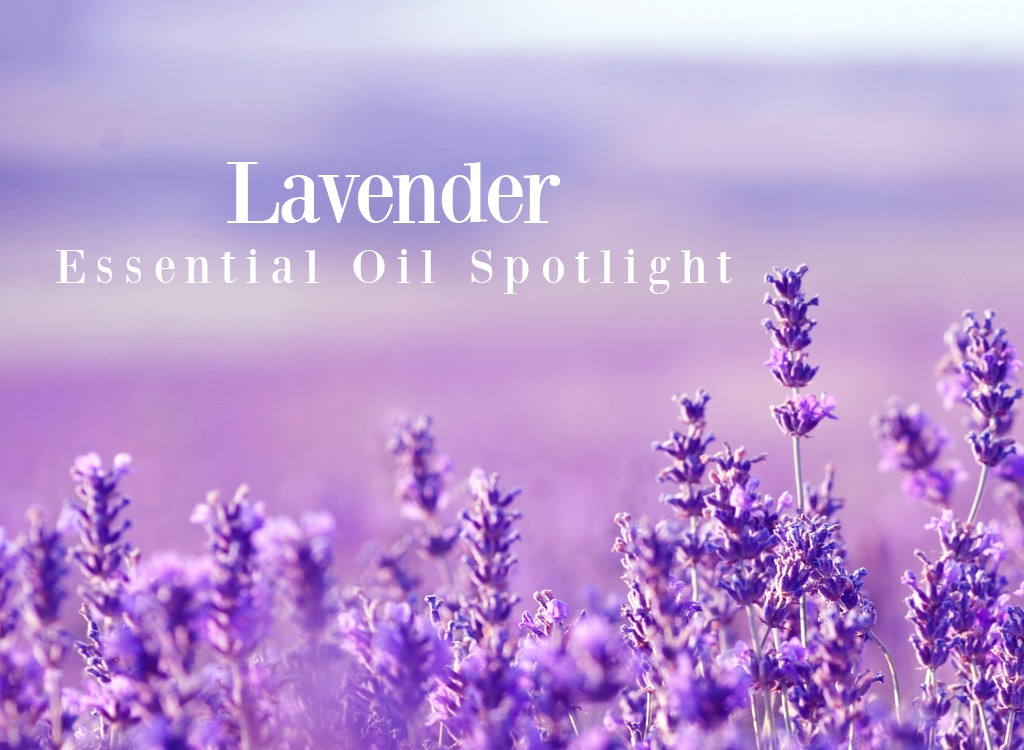 Lavender Essential Oil Spotlight