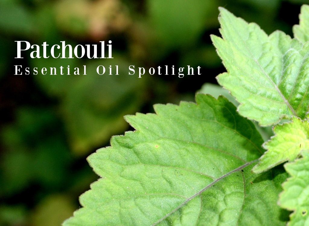 Patchuoli Essential Oil Spotlight