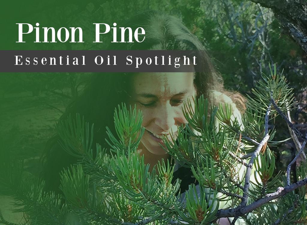Pinon Pine Essential Oil Spotlight
