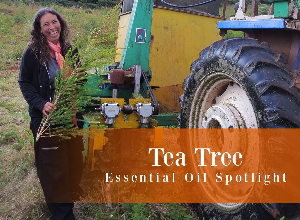 Tea Tree Essential Oil Spotlight