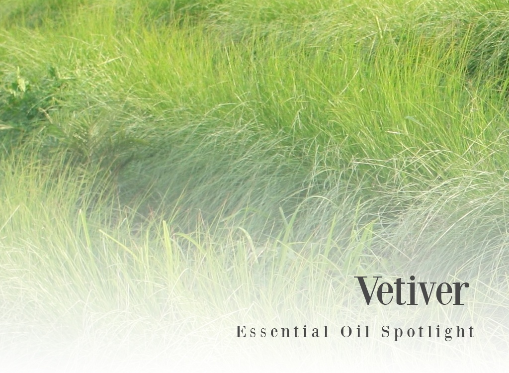 Vetiver Essential Oil Spotlight