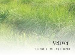 Vetiver Essential Oil Spotlight