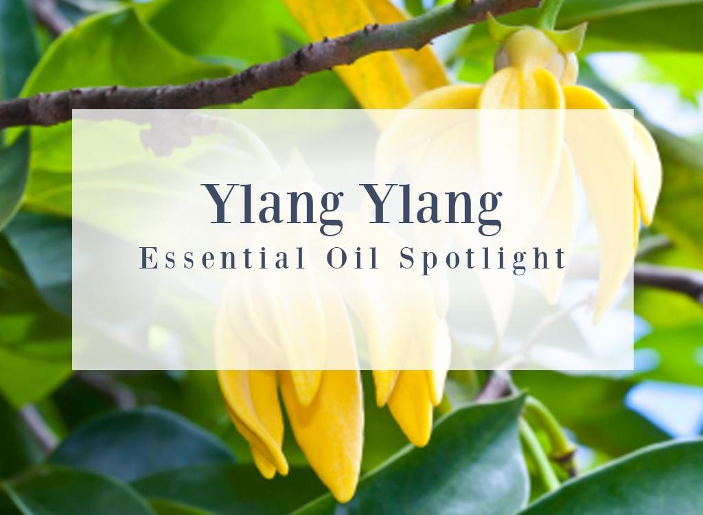 Ylang Ylang Essential Oil Spotlight