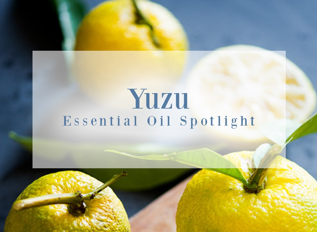 Yuzu Essential Oil Spotlight