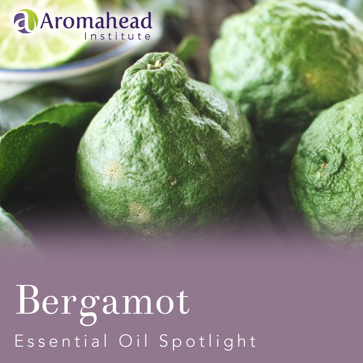 Blog - Oct 1 2018 - Bergamot  Essential  Oil  Spotlight - Blog Title - 1200 x 1200 -V1