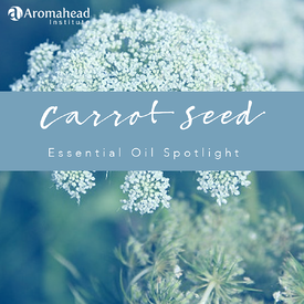 Blog-Dec 3-Carrot Seed Essential Oil Spotlight-title- 1200 x 1200