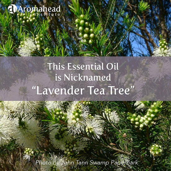 Lavender Tea Tree